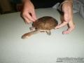 turtles-pets-012