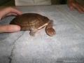 turtles-pets-017