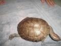 turtles-pets-018