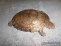 turtles-pets-024