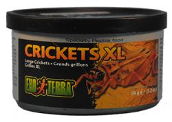Exo-Terra-Crickets-XL