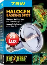 Halogen_Basking_Spot
