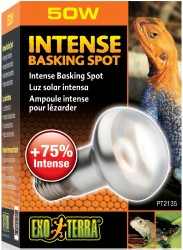 Intense_Basking_Spot