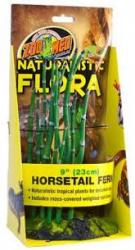 horsetail frn