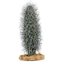 plam cactus