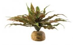 stat cactus